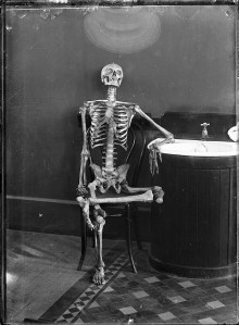 Portrait of an Articulated Skeleton on a Bentwood Chair from the Powerhouse Museum Collection