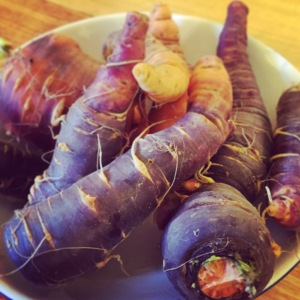 Heritage carrots from the garden